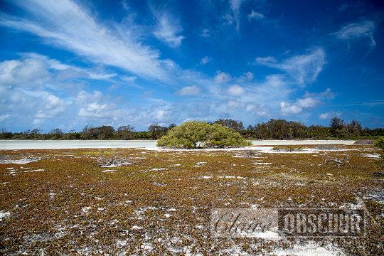 Lonely tree Astove lagoon Seychelles