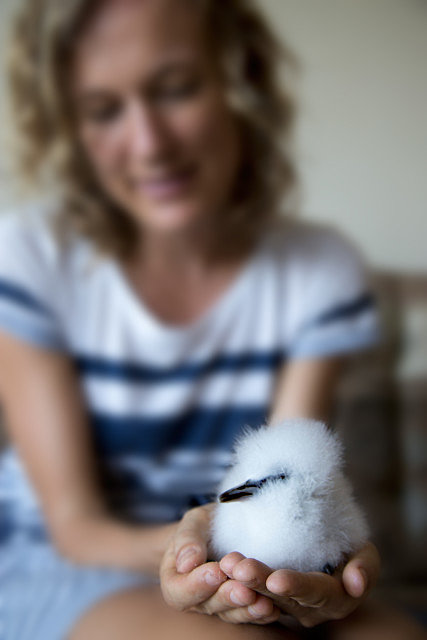Portrait Klaartje Puttemans Whitetail tropicbird chick in hands Seychelles